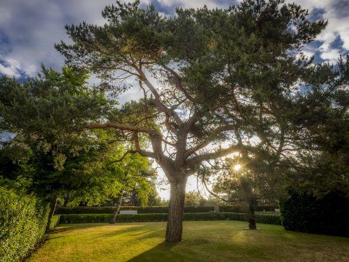 tree hdr landscape