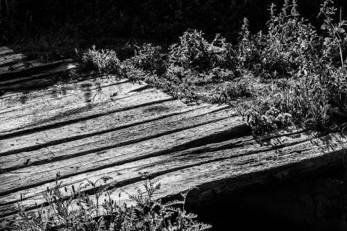 tree black and white nature