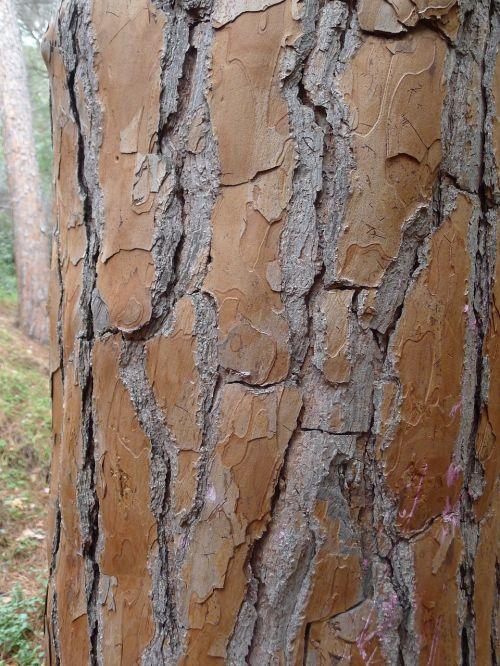 tree bark tribe