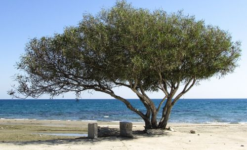 tree beach seaside
