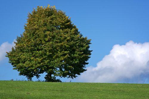 tree individually meadow