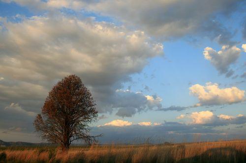 tree veld grass