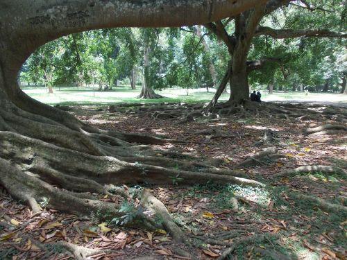tree nature garden