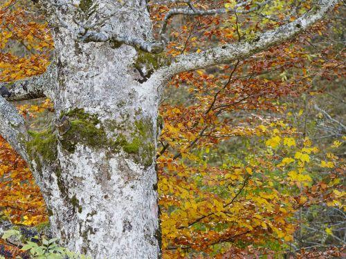 tree leaves nature
