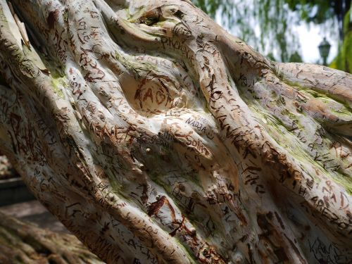 tree wood structure