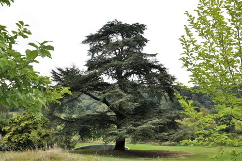 tree green garden