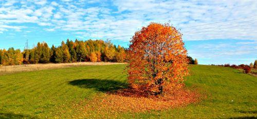 tree autumn landscape