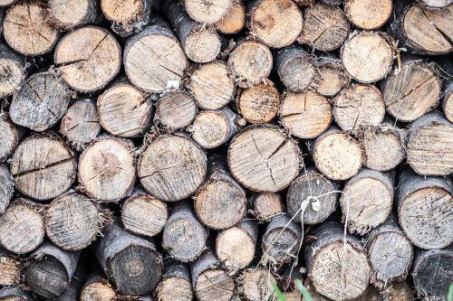 tree logs background