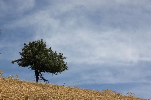 tree loneliness mountains