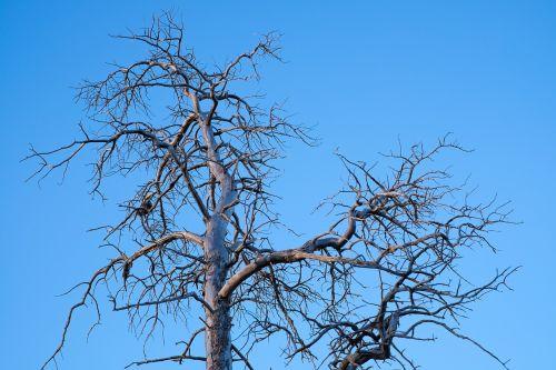 tree old himmel