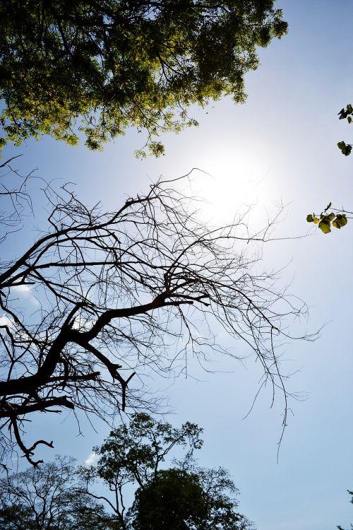 tree branch dry