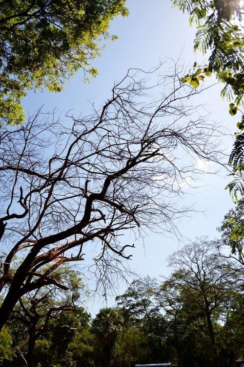 tree sunlight polonnaruwa