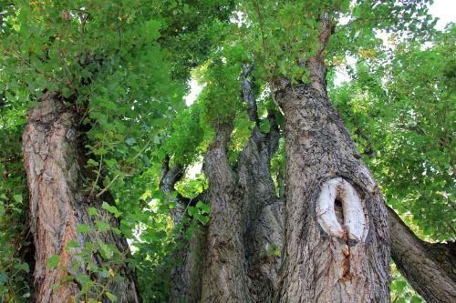 tree tribe log