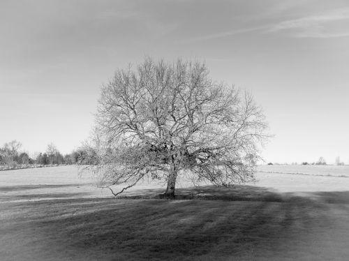 medis,laukas,pieva,ruduo,juoda ir balta,kraštovaizdis,nuotaika