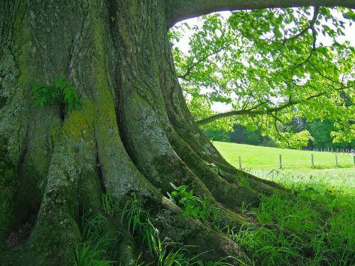 tree root tribe