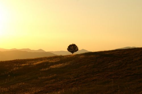 tree solitary landscape