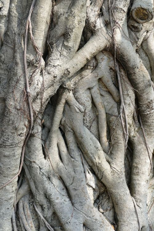 tree root nature