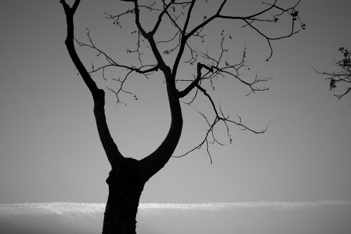 tree monochrome landscape