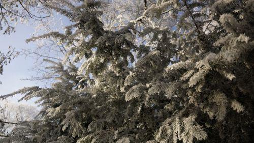 tree white green