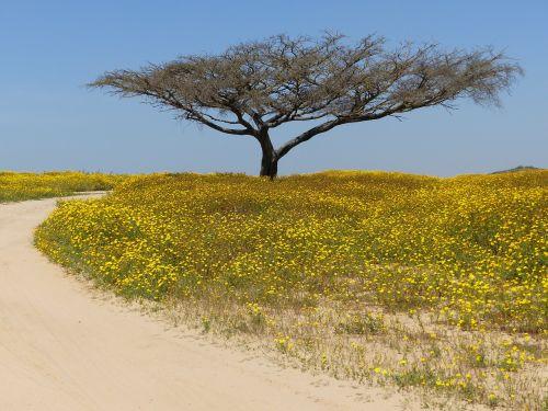 tree desert negev