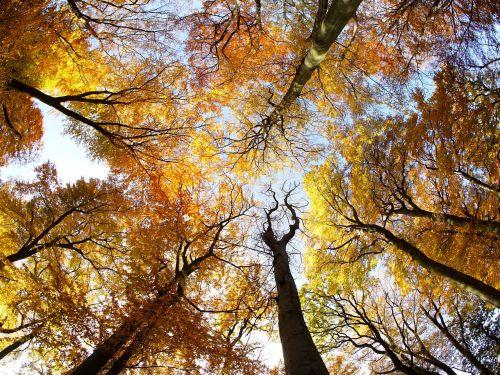 tree crown foliage