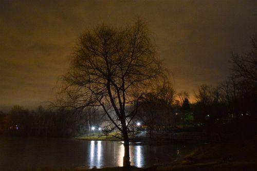 tree lights ice