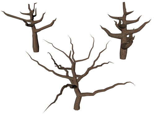 tree isolated dead plant