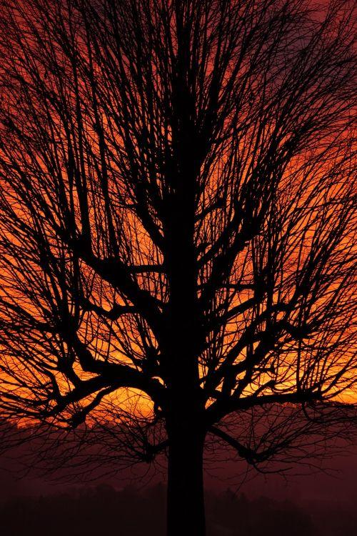 tree sunset aesthetic