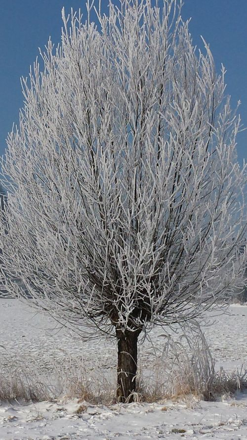 tree hoarfrost wintry