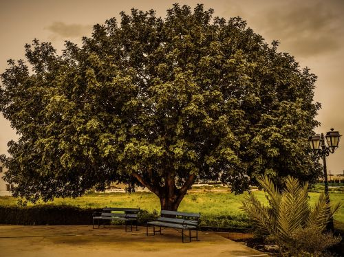 tree benches lantern