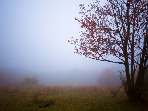 tree autumn fog