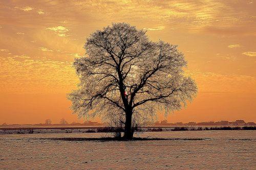 tree lonely winter