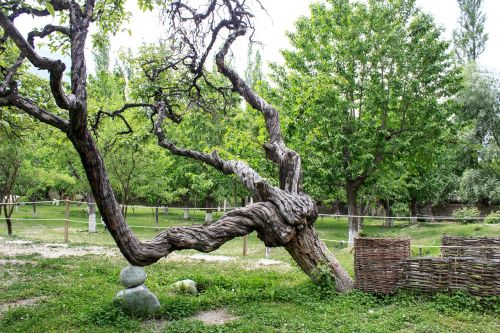tree greenery weird