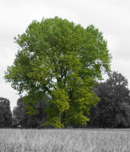 tree green black white