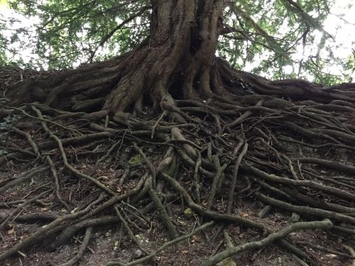 tree roots nature