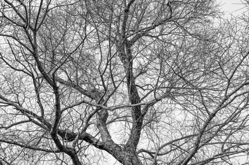 medis,karūna,trejetas,gamta,miškas,dangus,estetinis,Kahl,filialai,užaugo,mediena,žurnalas,natūralus medis būgnas,gentis,senas medis,medžių kompleksas,pavasaris