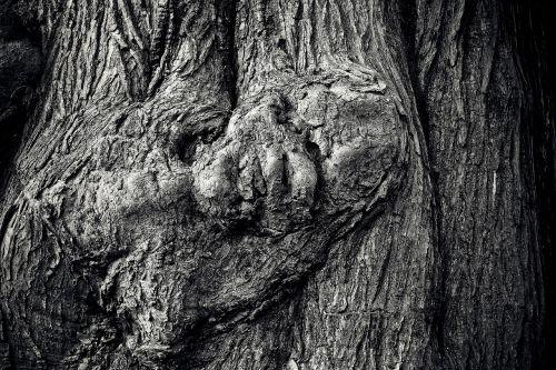 medis,medžio žievė,žurnalas,gamta,gentis,mediena,žievė,miškas,struktūra,knotula,Uždaryti,senas,tekstūra,fonas,gnarled,modelis,ištemptas,grūdai,medinė konstrukcija,senoji mediena,rudos atspalviai,avarija,juoda balta,juoda ir balta,juoda,balta,sw