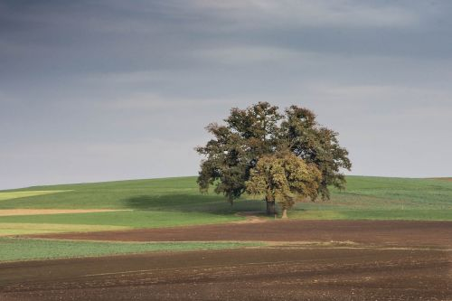 tree landscape nature