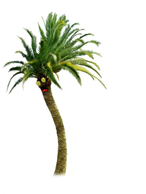 tree nature palm