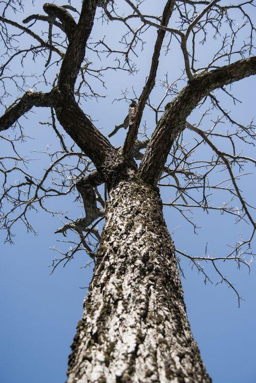 tree twigs old tree