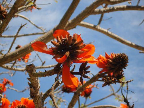 tree flowers terra natura