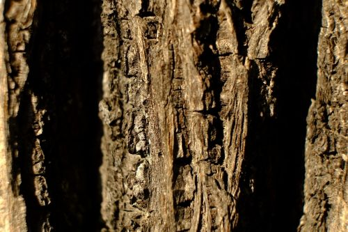 tree bark log