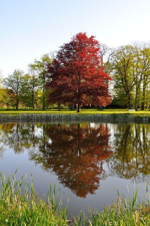 tree beech park