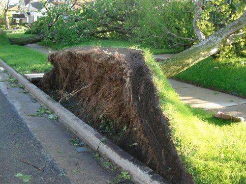 tree roots tornado