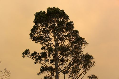tree bushfire smoke