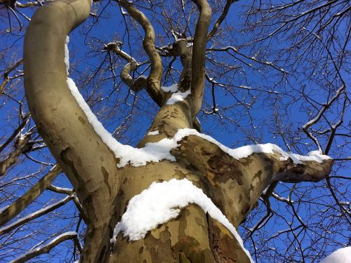 tree aesthetic winter
