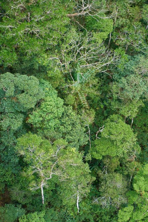 medis,miškas,gamta,kraštovaizdis,lapai,augalas,fonas,aplinkosauga,Highland,žalias laukas,žalias,medžiai