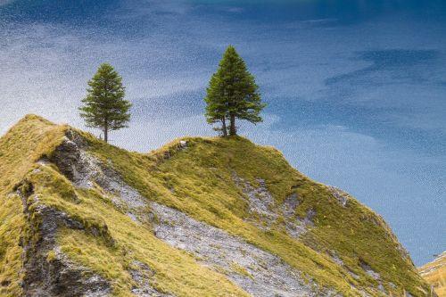 tree firs hill