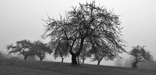tree sad landscape