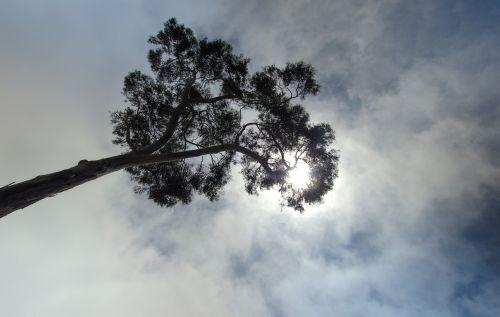 tree himmel cloud